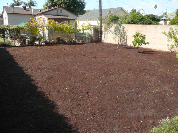 Before-Backyard